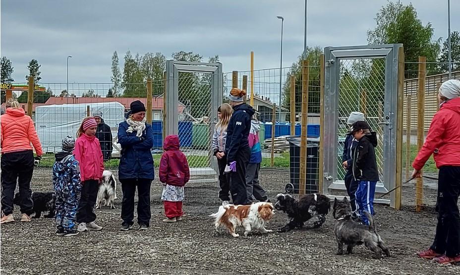 Kuvassa koirapuisto